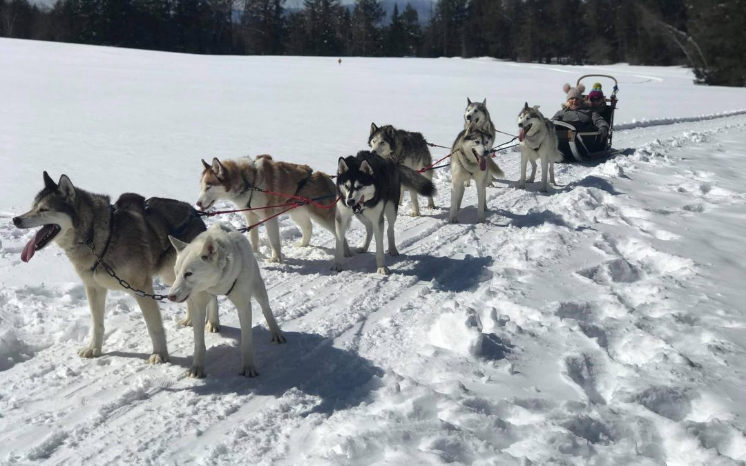 Peace Pups!